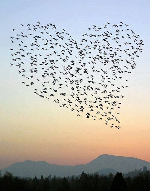 Flying Hearts